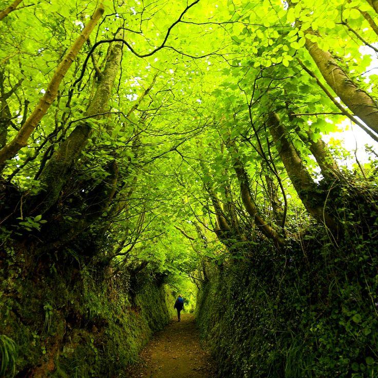 The sunken path to Clovelly in Devon