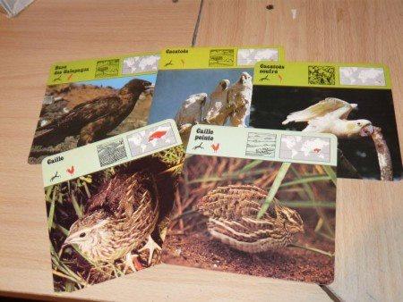 Collection de fiches animaux des années 1980