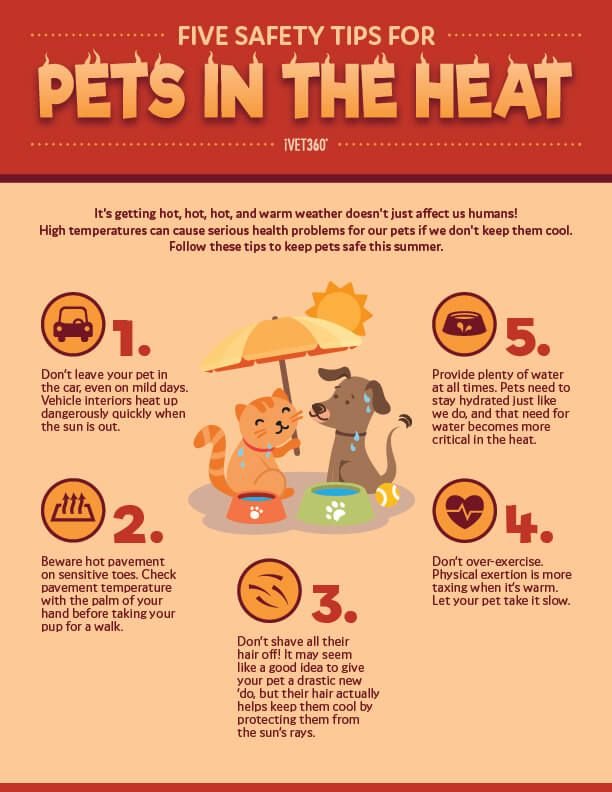 5 Safety Tips For Pets In The Heat Infographic Heat