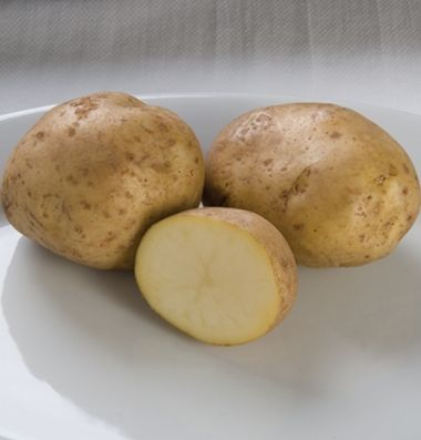 """Excellent, all purpose potato. Widely adapted, fast growing plants do best when planted at 8-10"""" spacing to avoid overly-large tubers. High yields of round to oblong tubers that store well, with buff skin and white flesh. Resistant to potato virus A and potato virus Y; moderate resistance to potato virus S, potato virus X, blackleg, and foliage late blight. Organically grown."""