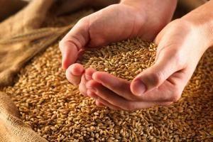 Рекордный урожай может привести к значительному спаду инфляции.  Высокий урожай зерновых может привести к рекордному падению цен. Аналитики прогнозируют уход инфляции ближе к 3638% по итогам года. При этом впервые за всю историю в августе дефляция может составить 03%.  Сельское хозяйство оказывает заметное влияние на цены. Поскольку пшеница и другие зерновые являются социально важным сырьем их высокий урожай способен снизить цены на хлеб макаронные изделия и крупы и повлиять на общий…