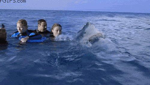 ¡Sí!, ese es un tiburón: | 23 roces con la muerte que harán que quieras quedarte en casa por un rato