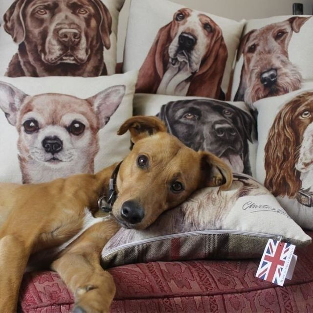 Dog Lovers Filled Cushion from the WaggyDoz Range by Evans Lichfield