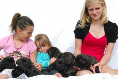 Are Cane Corsos Good With Kids