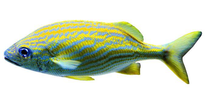 Aquariums, Poisson, L'Eau Salée