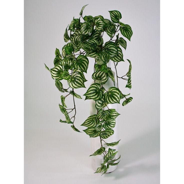 Les 25 meilleures id es de la cat gorie plantes - Support de plantes d interieur ...