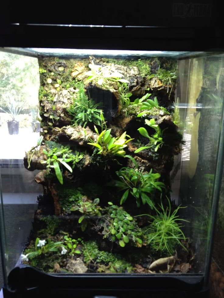 81 best paludarium images on pinterest fish aquariums for Fish tank terrarium