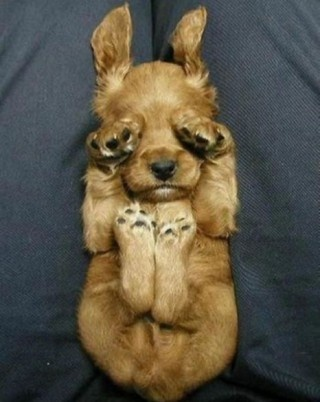 puppy: Sleep Dogs, Cute Puppies, Funny Dogs, Little Puppies, So Cute, Sleepy Puppies, Baby Animal, Peekaboo, Peek A Boo