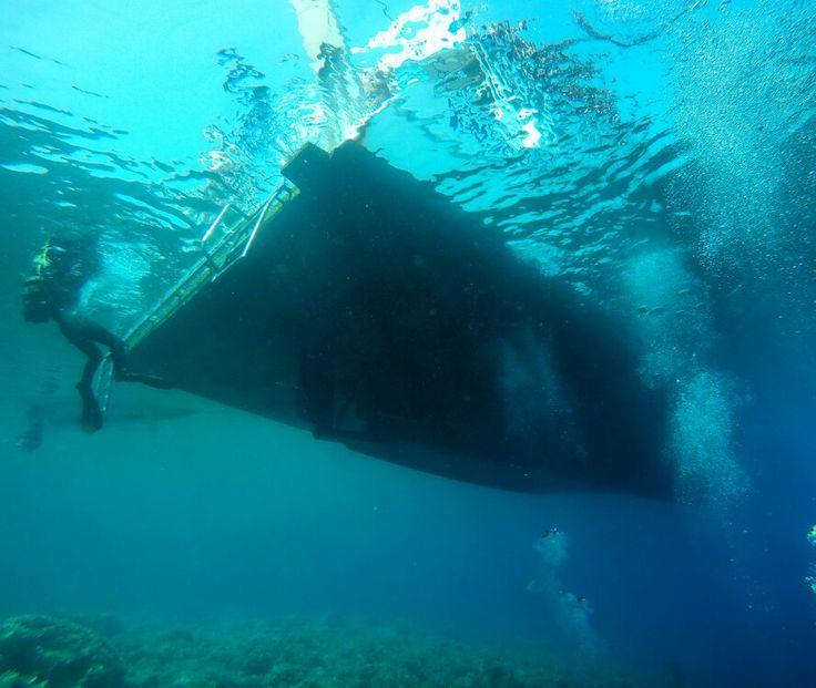 Ayvalık dalış okulu - ida dalış merkezi #scuba #scubadiving #diving #underwater #dalisnoktam #ayvalikdalis #ayvalık #ayvalikscuba #daliskursu #dalismerkezi #dalisokulu #idadalismerkezi 05326330228 www.idadiving.com