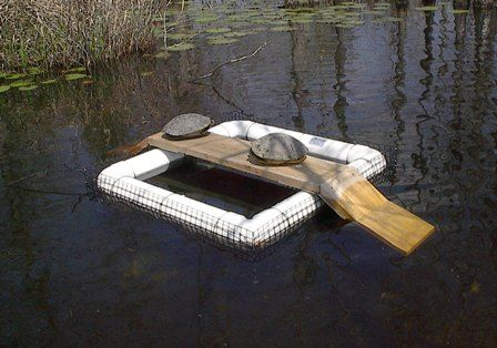 Turtle trap $118, but I could make it myself... It would be nice use it to sort out the Snappers!  They like to eat baby ducks.