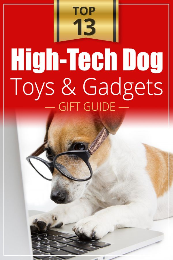 27 Cool Dog Gadgets Your Dog Will Love Dog Toys Dogs Dog Gadgets