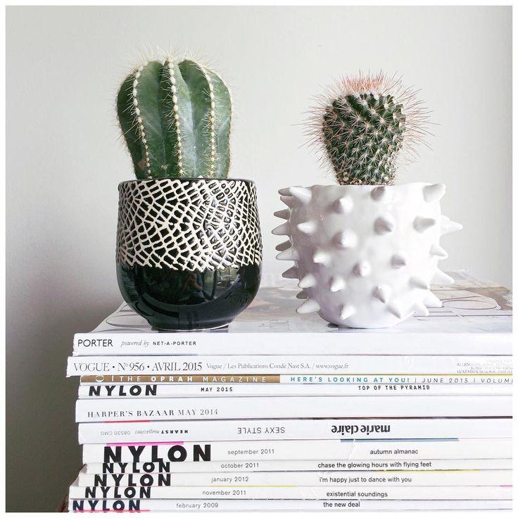 fun cacti in ceramic pots