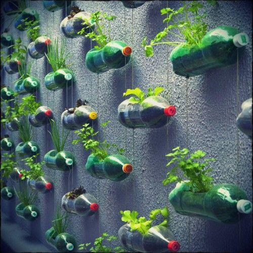 Verticale tuin van plastic flessen Vertical garden made from plastic bottles.