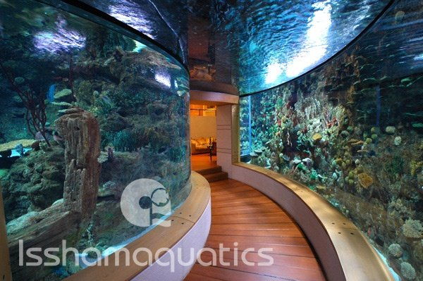 If you 39 re going to dream dream big amazing walk through for Dream about fish out of water