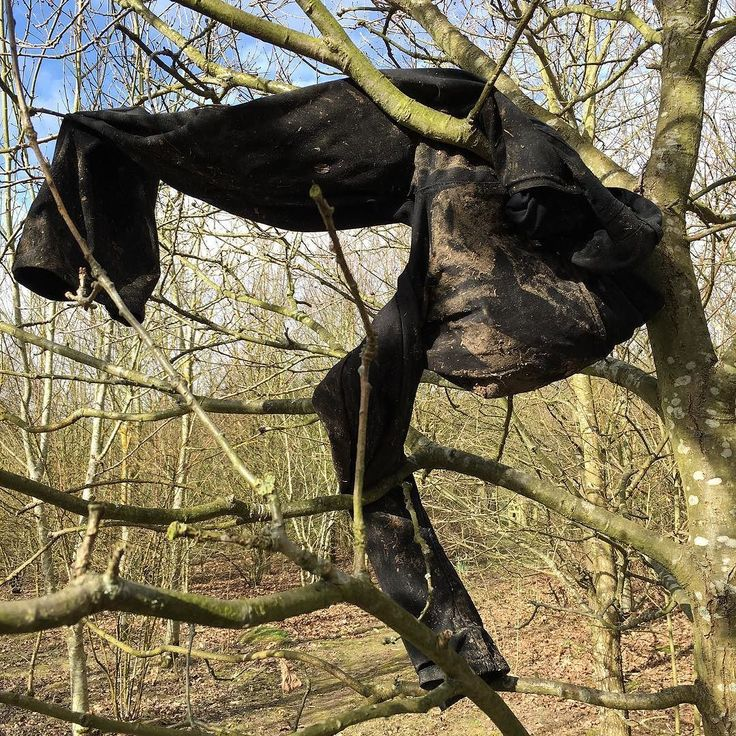 These trousers in a tree. How did they get there? Why are they so muddy? I always worry when I see things like this. #lookup #divine_trees #woods #ockendon #beautifulthurrock #thurrock
