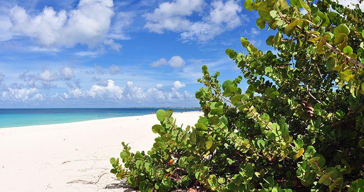 Eagle Beach Aruba's langste stuk strand met parelwit zand, Eagle Beach, is door Tripadvisor benoemd tot één van de mooiste stranden in de Caraïben. Hier staat de welbekende fofoti boom. Zowel de lokale bevolking als toeristen genieten op dit strand. Eagle Beach is goed bereikbaar via de grote weg, het heeft voldoende parkeer plekken, strandhutjes, schaduwplekjes etc. Geniet van een heerlijke picknick of een fantastische strandwandeling.