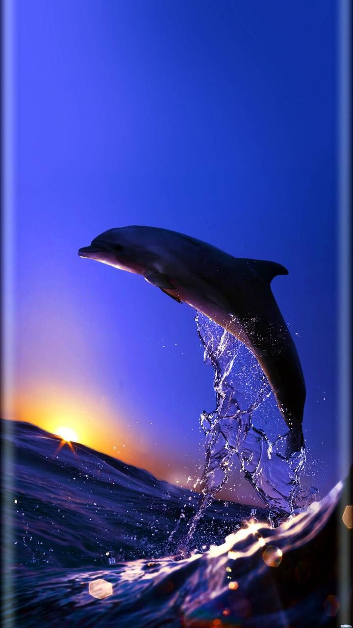 The Highest Quality Dolphins Backgrounds For You Iphone In 2021 Beautiful Sea Creatures Dolphin Photos Underwater Animals