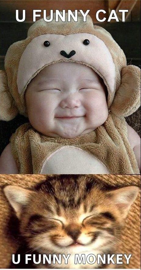 Grappige kat met aapje