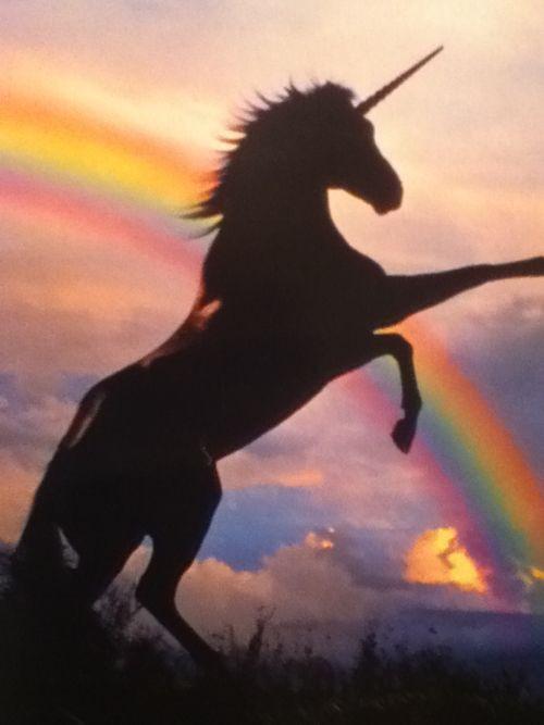 Unicorns can summon rainbows so that they will look sufficiently majestic in the evening light. Only the most technicolor rainbows are allowed to serve unicorns this way.                                                                                                                                                     More