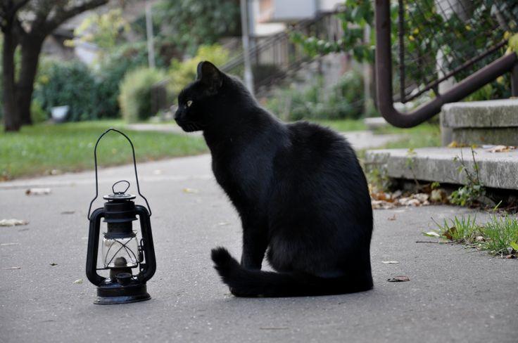 Black cat. Autumn. Storm lantern.  Őszi macska viharlámpással.