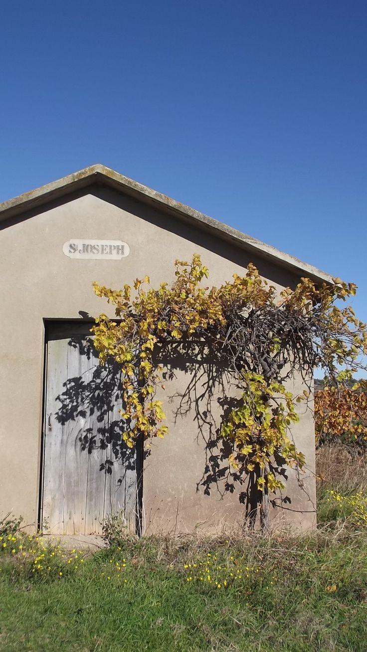 cabane de vignes Minervois - entre Rieux Minervois et l'etang de Marseillette