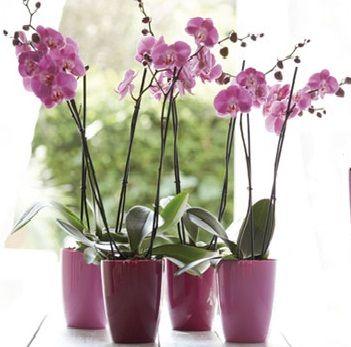 FULL SIZE ORCHID, Correo de las flores