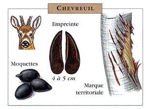 Au fil de la Garonne - Flore et faune locales
