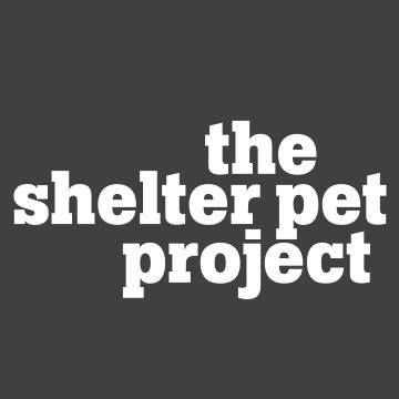 pet shelter project The shelter pet project is the first national public service announcement campaign created to bring together animal welfare organizations to increase pet adoption and save more lives.