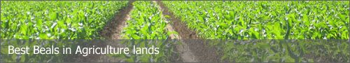 Buy or sell agriculture land or plots in palwal with the help of satyamproperties.info .
