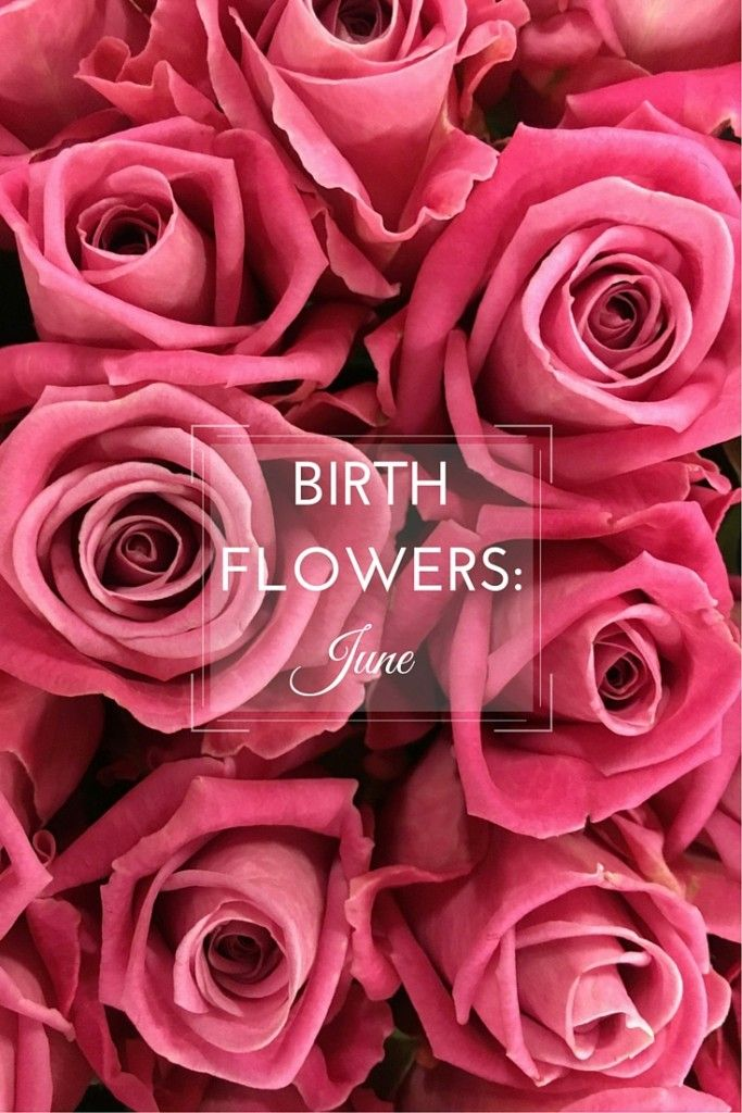 Flowers are a popular birthday gift, make it personal by choosing the recipient's birth flower. Take a look at June's birth flowers, rose & honeysuckle.