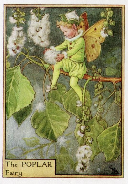 Poplar Flower Fairy Vintage Print, c.1950 Cicely Mary Barker Book Plate Illustration