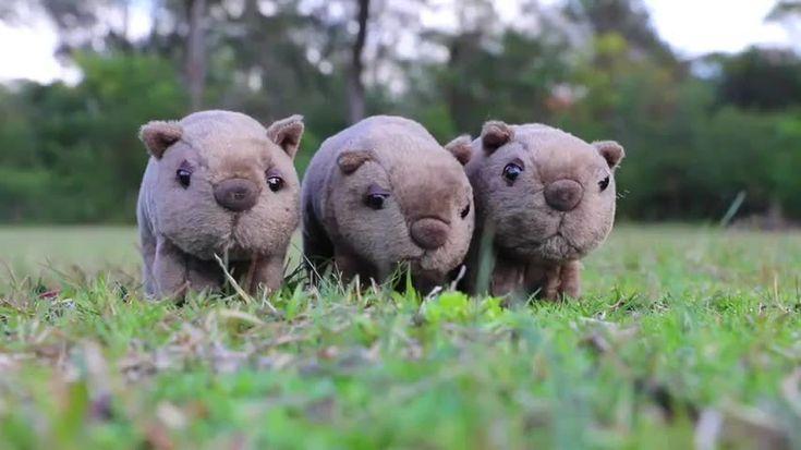 Wombat Socks
