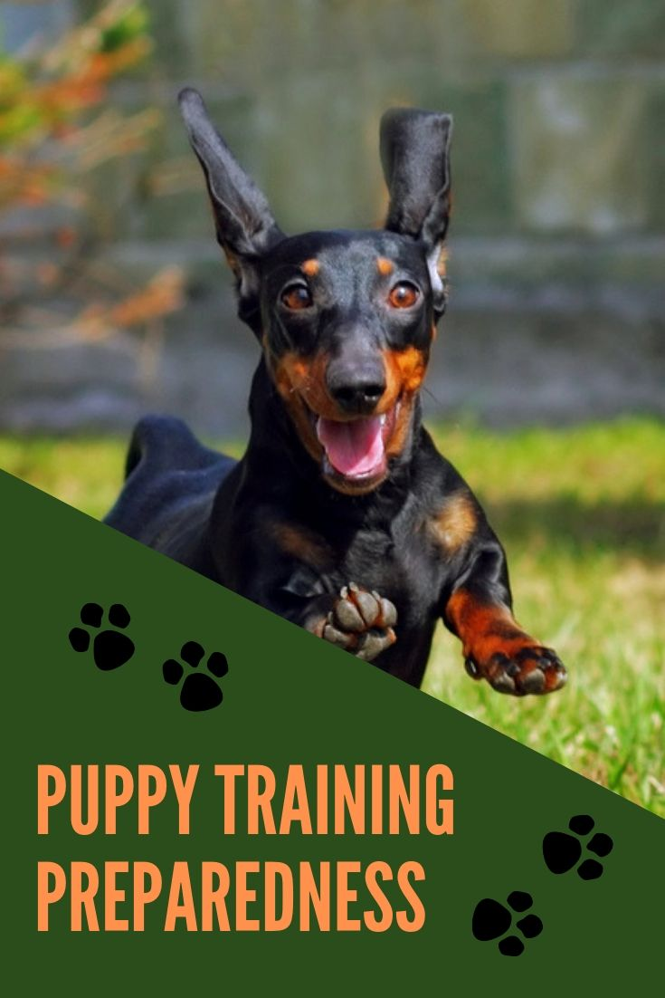 It Takes A Couple Of Years Of Consistent Training To Have Your Dog