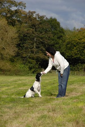 Very Helpful Puppy Training Tips and Guide - good examples and clear instructions on house breaking, stoping play biting, and more