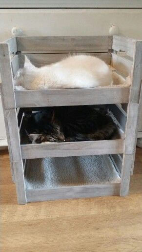Cat bunk beds made from garden crates