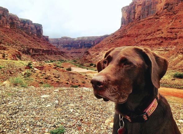 Lorsqu'il apprend que son chien est atteint d'un cancer, il décide de l'emmener dans un road-trip fabuleux !