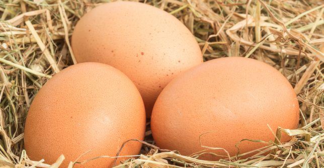 Yumurtanın faydaları nelerdir ? Her gün yumurta tüketmek sağlığımızı nasıl etkiler?  http://www.doktortv.com/haber/yumurta-anne-sutunden-sonra-en-iyi-protein-kaynagi