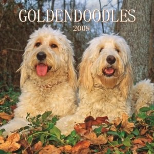 Goldendoodles 2009 Square Wall Calendar (Calendar) www.amazon.com/...