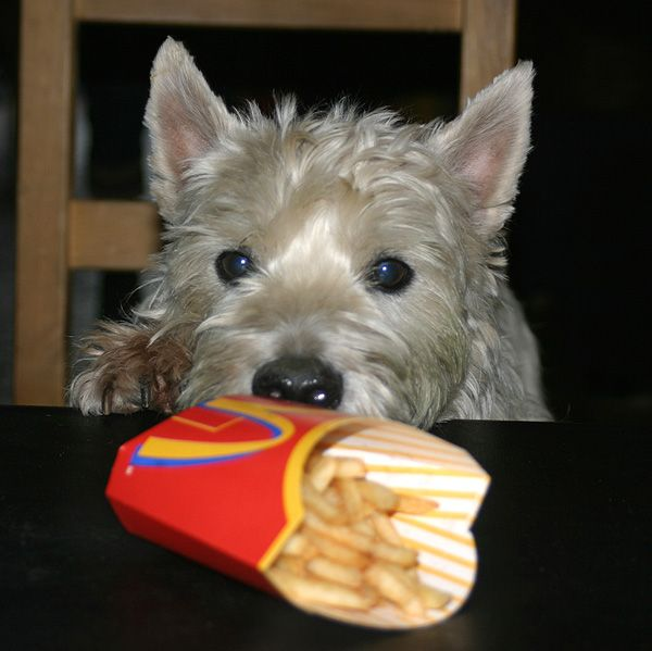 Mein Hund hat immer Hunger!