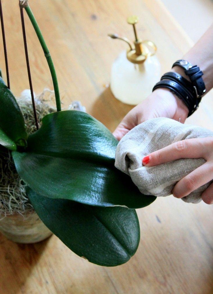 Orchid care | Gardenista