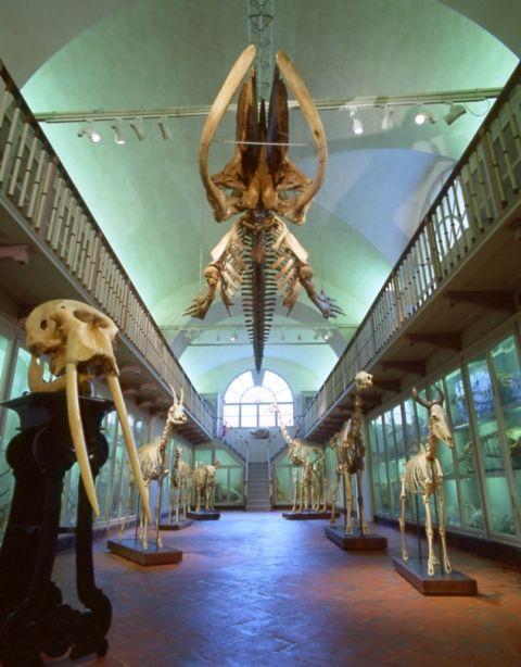 http://archivio.gonews.it/foto/firenze_museo_della_specola_salone_scheletri.jpg