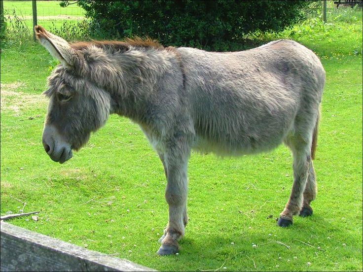 Mules Donkeys Burros   Diposkan oleh Ando di 6:44 PM
