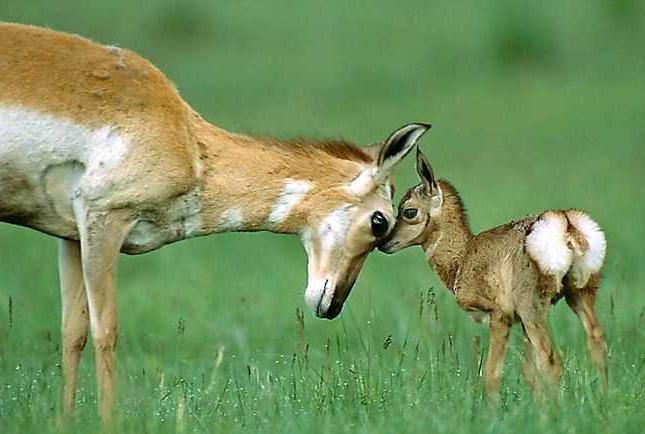 mamma e figlio.jpg (645×434)