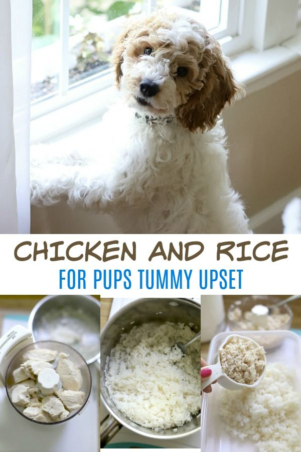 Chicken And Rice For Puppy Chicken Rice Recipe For Dogs Best