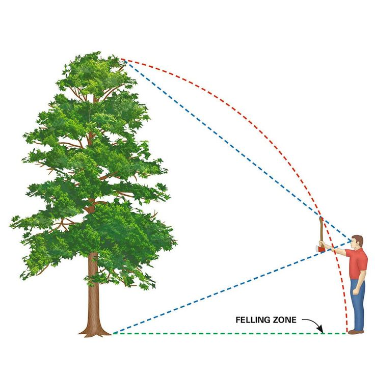 "Estimate the Felling Zone Trees are taller than you think and reach farther on the ground than you'd expect. You can estimate where a tree will fall by using the ""ax handle trick."" Hold an ax handle at arm's length, close one eye, and back away from or move toward the tree until the top of the ax is even with the treetop and the bottom is even with the base. Your feet should be about where the treetop will rest after falling. It's just an estimate, though, so allow extra room if there's…"