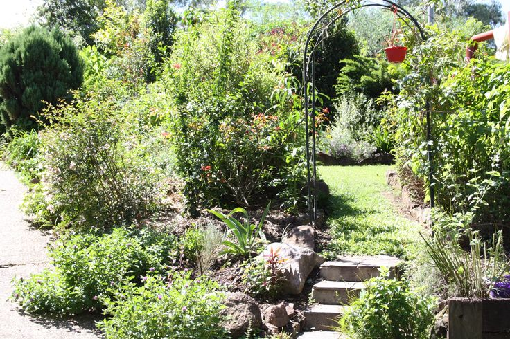 Antonia's garden.... Australian cottage garden..i took this picture in 2012