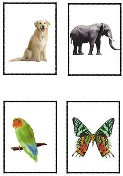 Living and Nonliving Picture Sort