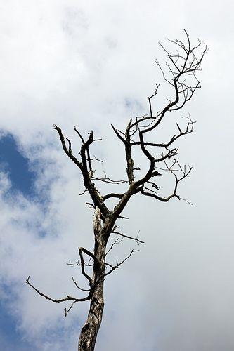 Lonely Tree from Merbabu