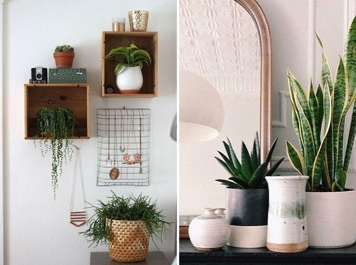 plantas para alegrar el hogar