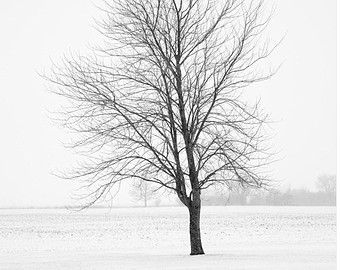 Enchanted Forest Black and White Tree by jennifersquires on Etsy